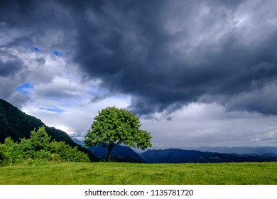 Vivid green tree after rain on a mountain top. Vibrant landscape of Julian Alps in Slovenia