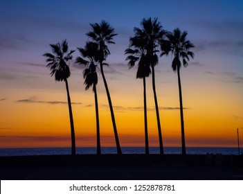Vivid layers of color create beautiful stunning sunset over Pacific Ocean. Row of palm trees silhouetted against sky