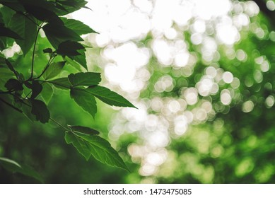 Vivid leaves of trees on bokeh background. Rich greenery in sunlight with copy space. Lush foliage close-up in sunny day. Natural green backdrop of scenic nature in backlight. Abstract texture.
