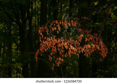 Vivid october day in colorful forest, maple autumn trees.