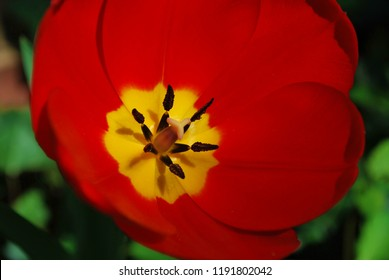Yellow flower with red center images stock photos vectors vivid red flower petals with yellow center and green background mightylinksfo