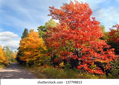 Vivid red maple tree stands besides curving, dirt lane in rural area of the Keweenaw Peninsula, Michigan.