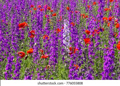 Vivid red and purple flower field