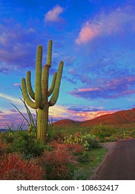 Vivid Roadside Cactus Sunset in Saguaro National Park