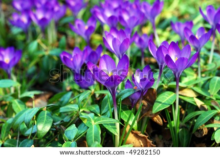 Vivid small purple flowers garden during stock photo edit now vivid small purple flowers in a garden during spring time mightylinksfo