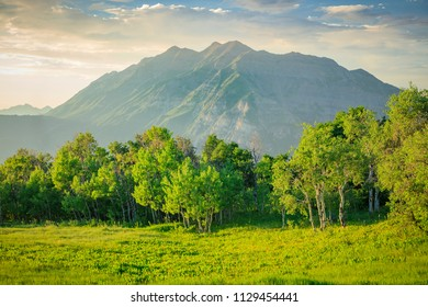 Vivid summer green in the Wasatch Front, Utah, USA.