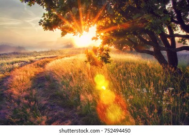 Vivid sun rays through branches of tree on morning meadow at sunrise. Bright dawn with shining sunbeams