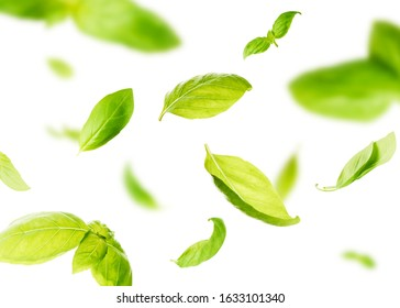 Vividly flying in the air green basil leaves isolated on white background 3d illustration. Food levitation concept. High resolution image