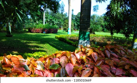VIZAG - OCT , 24 ,2018 : Padmapuram Gardens is a popular botanical garden situated in Araku. It is one of the well-known places of sightseeing in Araku Valley.