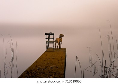 Vizsla dog standing dock on a misty morning. Next to him is an empty chair.