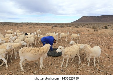 Vleiwerf, Williston, South Africa, 13 March 2018 - A coloured labourer cleans a tyre container on a Karoo farm to feed the sheep with maize