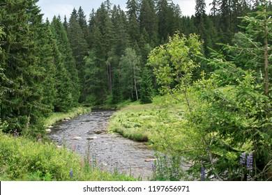 Vltava river in Bohemian Forest. Czech Republic.