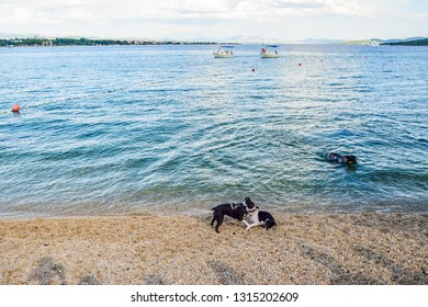 Vodice, Croatia - July 9, 2018: Dogs on a specially equipped beach for dogs.