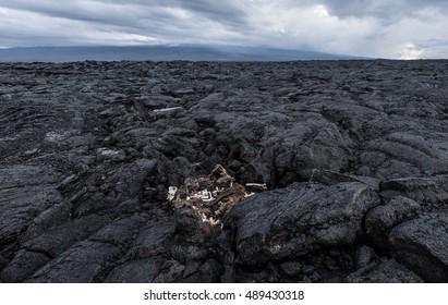 Volcanic landscape of Kona, Hawai'i with animal bones