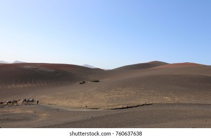 Volcanic landscape of the National Park of Timanfaya and a camel caravan with tourists. Lanzarote Island, Canary Islands, Spain.