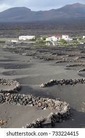 Volcanic landscape with plantations of Vid, Lanzarote, Canary Islands