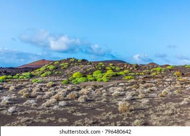 volcanic landscape in timanfaya national park, Lanzarote, Spain