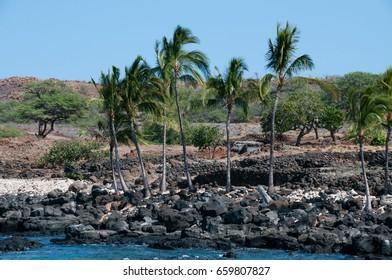 Volcanic rocks form walls at historical ruins of fishing village on Hawaii's big island.