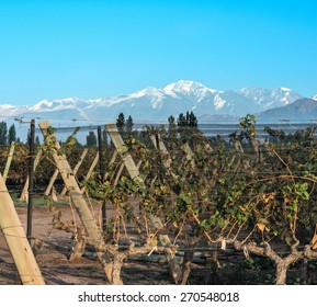 Volcano Aconcagua Cordillera and Vineyard. Andes mountain range, in Maipu, Argentine province of Mendoza
