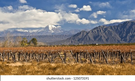 Volcano Aconcagua and Grape vines at a vineyard, Argentina. Aconcagua is the highest mountain in the Americas at 6,962 m. Andes mountain range, in the Argentine province of Mendoza