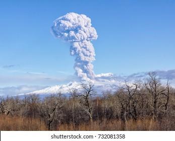 Volcano eruption.11.09.2017.Russia, Kamchatka, Kamchatka Mountain. Shiveluch Volcano.(3307m) Active Volcano Of Kamchatka Peninsula.