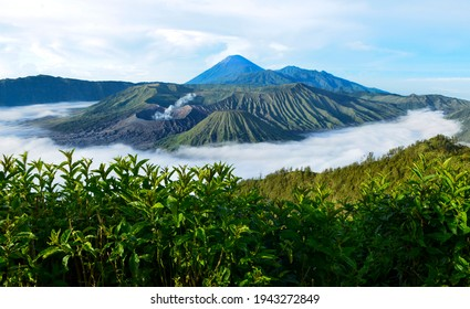 The volcano is still active and has an altitude of 2,392 meters above sea level. Bromo Indonesia