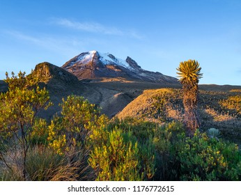 Volcano Tolima in Los Nevados National Park with beatyful vegetation frailejones (Espeletia), Colombia
