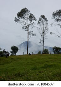 Volcano, trees and cows