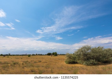 The Volgograd russian steppe or prairie in july with the oaks, grass and clouds. The typical summer landscape during the hot ry summer on the south of Russia