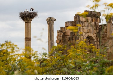 Volubilis - the popular touristic attraction and a Roman ruins near Meknes in Morocco. It was listed a UNESCO World Heritage.