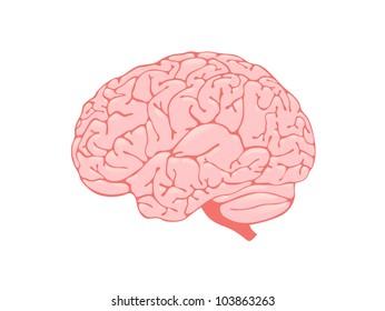Volumetric pink brain is a side view