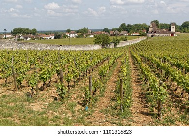 VOUGEOT, FRANCE, May 19, 2018 : Clos de Vougeot is a wall-enclosed vineyard, a clos, in the Burgundy wine region. Clos de Vougeot is the largest single vineyard in Cote de Nuits