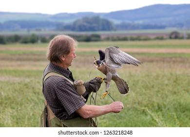 Vranovice, Czech Republic, Septermber 27, 2018, Hunter with falcon