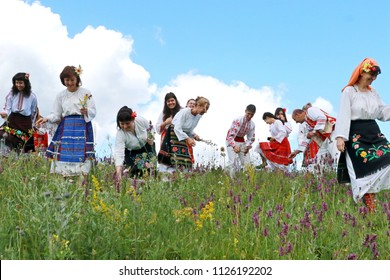 Vratsa, Bulgaria - June 25, 2018: People in traditional authentic folklore costume pick herbs on the day of the summer solstice of a meadow in Vratsa Balkan, Bulgaria