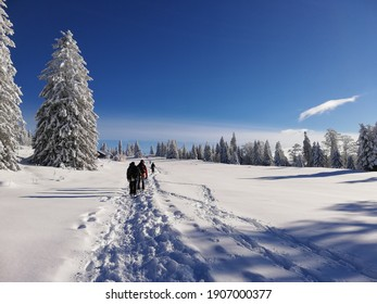 Vue des Alpes, Fontaines, Neuchatel, Switzerland - 13th December 2020: Official Snow-shoeing path at Vue des Alpes in Neuchatel in Switzerland, walkers in the background, snow covered trees and path.