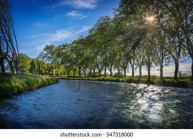 Vue des platanes sur le bord du canal du Midi dans le sud de la France près de Carcassonne