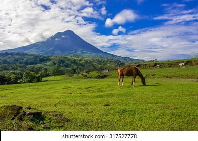Vulcano Arenal - Horses on pasture