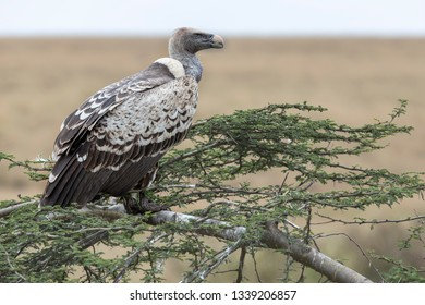 vulture birds sitting on a tree