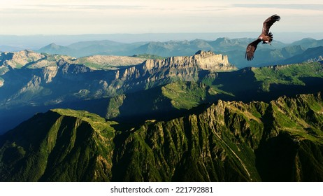 vulture flying above the mountains