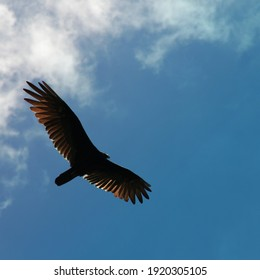 A vulture flying against a blue sky with light clouds