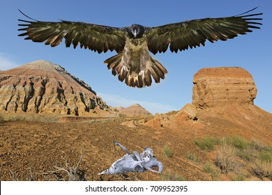 Vulture known as bearded vulture flying over the animal remains, Aktau Mountains, Kazakhstan.
