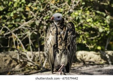 Vulture posing in the park