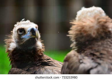 Vulture reflection