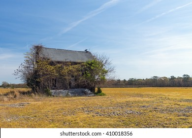 A vulture stands watch on an  abandoned house in an open field.  With no one to take care of it, trees and bushes are growing in, on, and around the house.