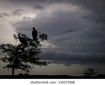Vultures in front of storm