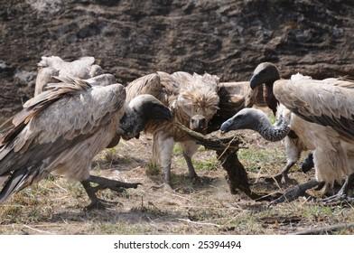 Vultures on Kill