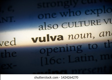 vulva word in a dictionary. vulva concept, definition.