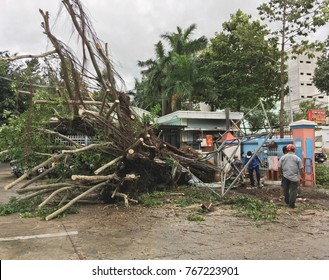 VUNG TAU, VIETNAM - OCTOBER 2017: Vietnamese men remove branches from a tree fallen during a night storm. 19 people died, dozens were missing  because of the typhoon Damri in November in Vietnam.
