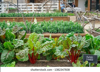 WACO, Texas / United States - April 1, 2019, Gardens with swiss chard at Magnolia Market owned by Chip and Joanna Gaines from the HGTV show Fixer Upper