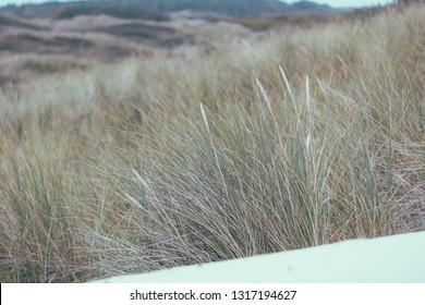 Wadden island  landscape Ameland Holland